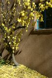 Outono de Santa Fe Foto de Stock