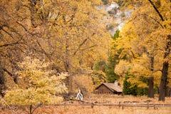 outono de Yosemite Foto de Stock