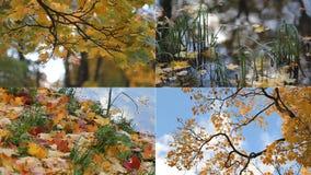 outono, dia do outono, parque do outono Colagem com vistas da floresta do outono vídeos de arquivo