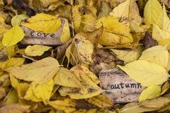 outono do amor Foto de Stock Royalty Free
