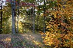 Outono do fim da tarde Fotos de Stock