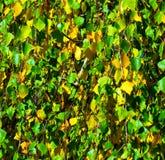 outono do fundo Fotografia de Stock Royalty Free