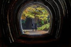 outono do lago Usui imagens de stock royalty free