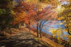 outono do lago Usui imagem de stock