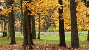 outono do movimento rápido da estrada video estoque