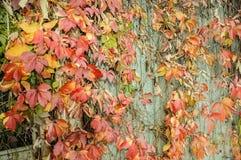 Outono dourado fotografia de stock royalty free