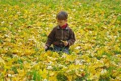 Outono dourado Fotografia de Stock