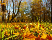 Outono dourado Imagem de Stock Royalty Free