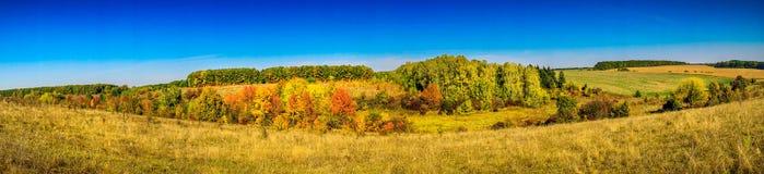 Outono dourado Foto de Stock