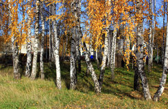 Outono dourado Fotos de Stock