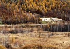 Outono dourado Imagens de Stock