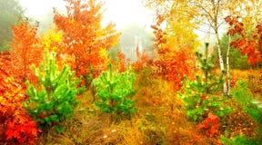 Outono dourado Imagem de Stock