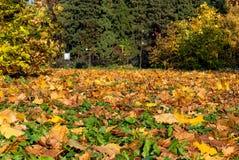 outono dourado durante todo o quadro imagens de stock royalty free