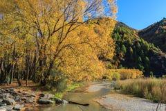 outono dourado em Arrowtown Fotografia de Stock Royalty Free