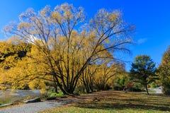outono dourado em Arrowtown Imagens de Stock Royalty Free