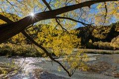 outono dourado em Arrowtown Foto de Stock Royalty Free