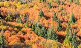 outono dourado em Arrowtown Foto de Stock