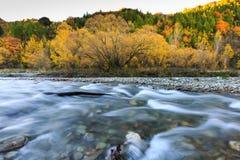 outono dourado em Arrowtown e em rio Fotografia de Stock Royalty Free