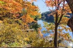outono dourado em Canadá Folhas da laranja e do amarelo Fotos de Stock Royalty Free