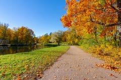 outono dourado ( fall) no parque de Alexander, Tsarskoe Selo ( Pushkin) St Petersburg, Rússia imagem de stock royalty free