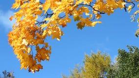 outono dourado, floresta do outono vídeos de arquivo
