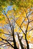 outono dourado, folhas vermelhas Queda, natureza sazonal, folha bonita Fotografia de Stock Royalty Free