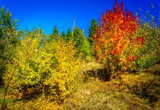 outono dourado maravilhoso no bosque agradável Foto de Stock