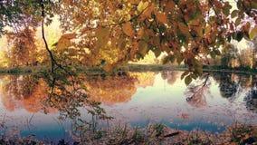 outono dourado no lago da floresta na noite video estoque