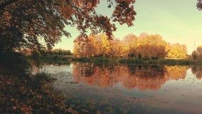 outono dourado no lago da floresta na noite vídeos de arquivo