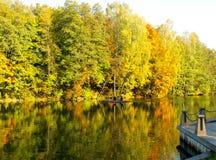 outono dourado no lago Reflexão na água do fol amarelo fotos de stock