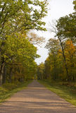 Outono dourado no parque #2 Imagens de Stock Royalty Free