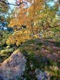 Outono dourado Reflex?o do c?u na ?gua Motim colorido da floresta do outono das cores Ver?o indiano Autumn Landscape fotos de stock royalty free