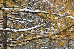 outono e inverno Foto de Stock Royalty Free