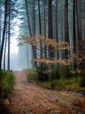 outono e névoa Imagens de Stock Royalty Free