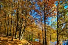 outono e natureza Fotos de Stock Royalty Free