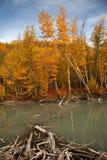 Outono em Alaska Imagens de Stock