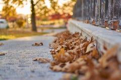 outono em Ancara Imagem de Stock