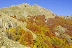Outono em Balcãs centrais, Bulgária Foto de Stock Royalty Free