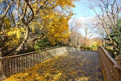 Outono em Central Park, New York foto de stock