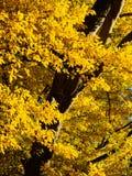 outono em Derbyshire Fotos de Stock