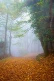 Outono em Italy Imagens de Stock Royalty Free