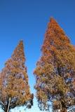 Outono em Japão Fotos de Stock