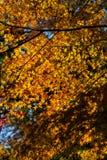 Outono em Japão imagem de stock