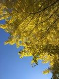 Outono em Japão Foto de Stock
