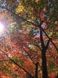 Outono em Japão Imagens de Stock