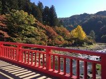 Outono em Japão Fotografia de Stock