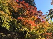 Outono em Japão Imagens de Stock Royalty Free