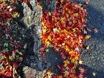 Outono em Japão Fotografia de Stock Royalty Free