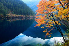 Outono em Jiuzhaigou, Sichuan, China fotos de stock royalty free
