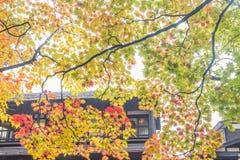 outono em kakunodate Foto de Stock